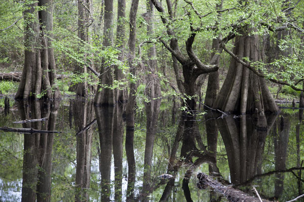 big-thicket-national-preserve02